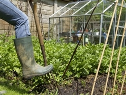 LETTER: Garden project springs to life