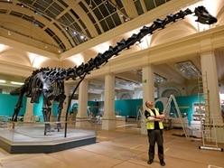 Dippy on tour: Huge 70ft-long dinosaur exhibit arrives in Birmingham