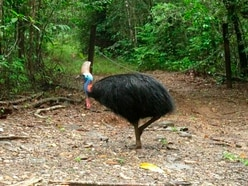 Large flightless bird that killed its 75-year-old owner put up for auction