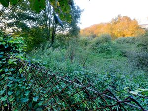 The area of the proposed traveller transit site is currently covered in trees and bushes