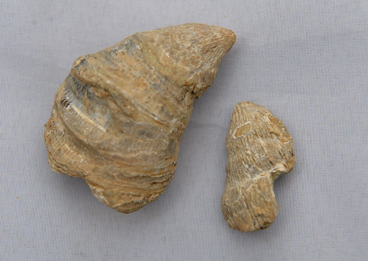 The fossil is thought to be from the Paleozoic Era