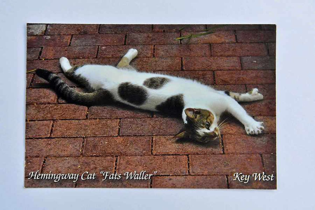 The front of the postcard depicting Ernest Hemingway's famous Fats Waller cat.