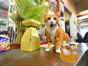 George the station cat celebrates his victory in the world cup of stations