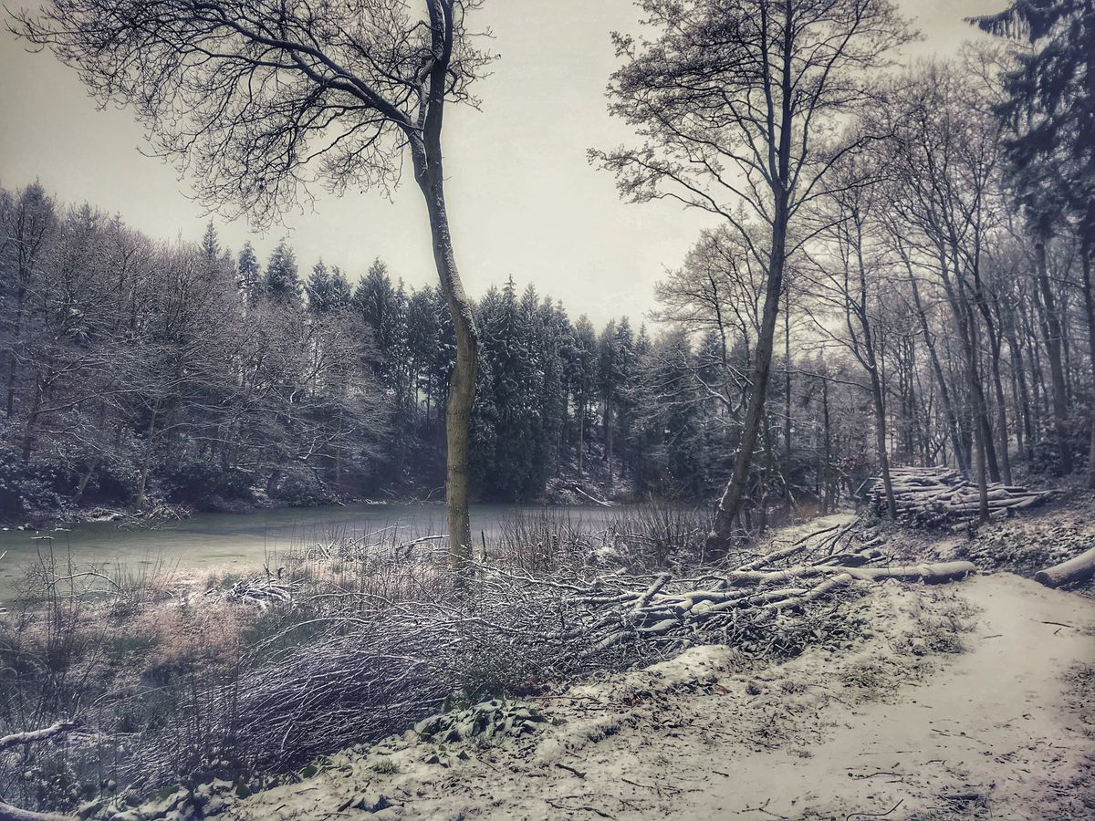 Snow in Longden, Shrewsbury. Photo: Robyn Thomas.