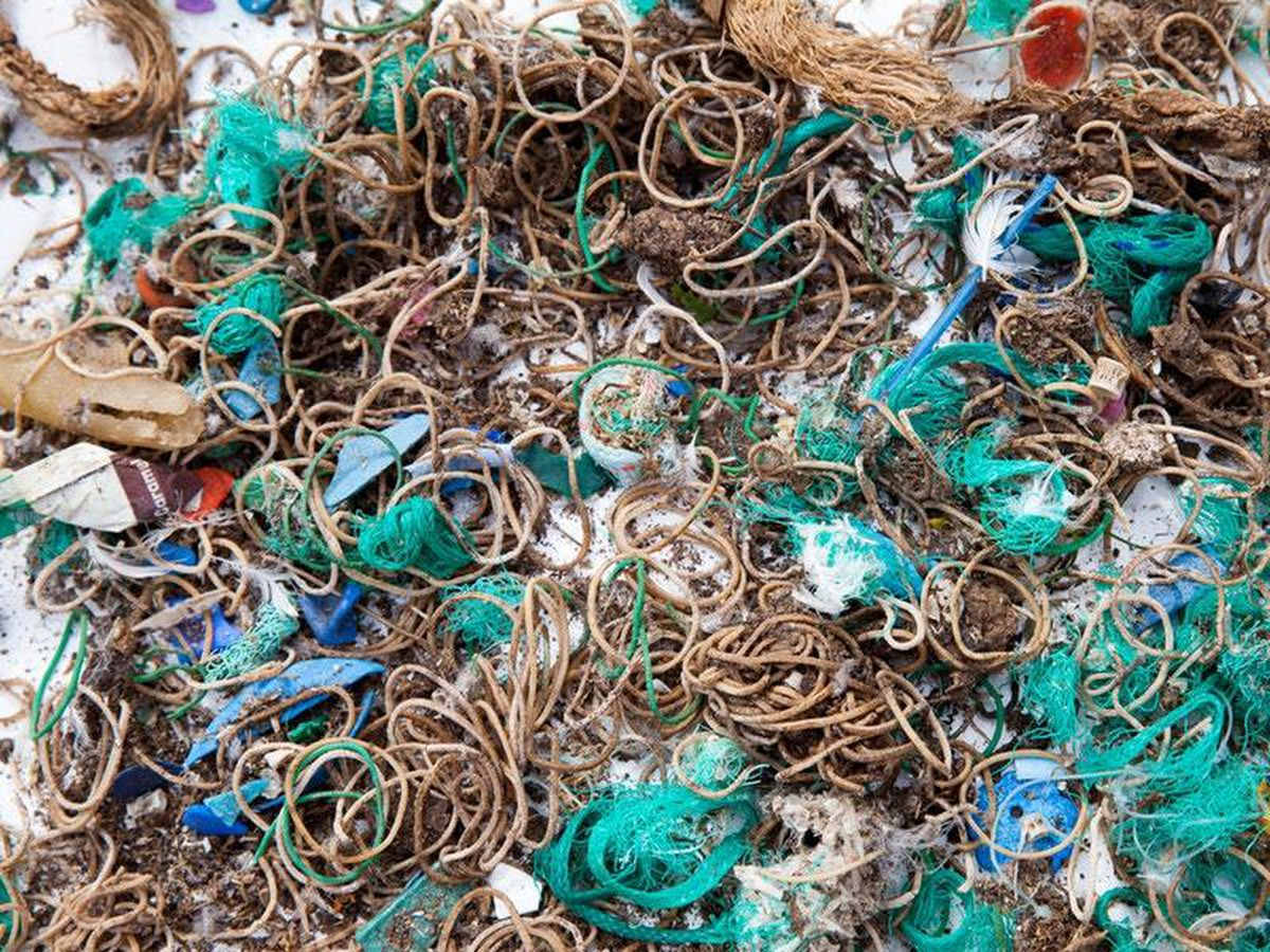 Elastic bands and fishing waste collected from Mullion Island