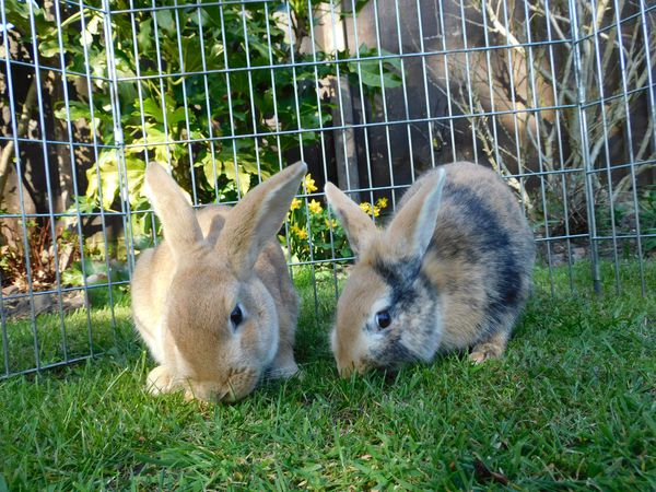 RSPCA is caring for more Rabbits