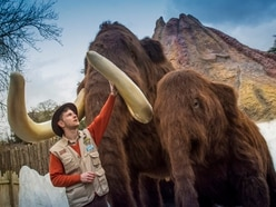 West Midland Safari Park's new Ice Age exhibit to open this week