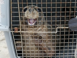 Two orphaned seal pups released back into wild