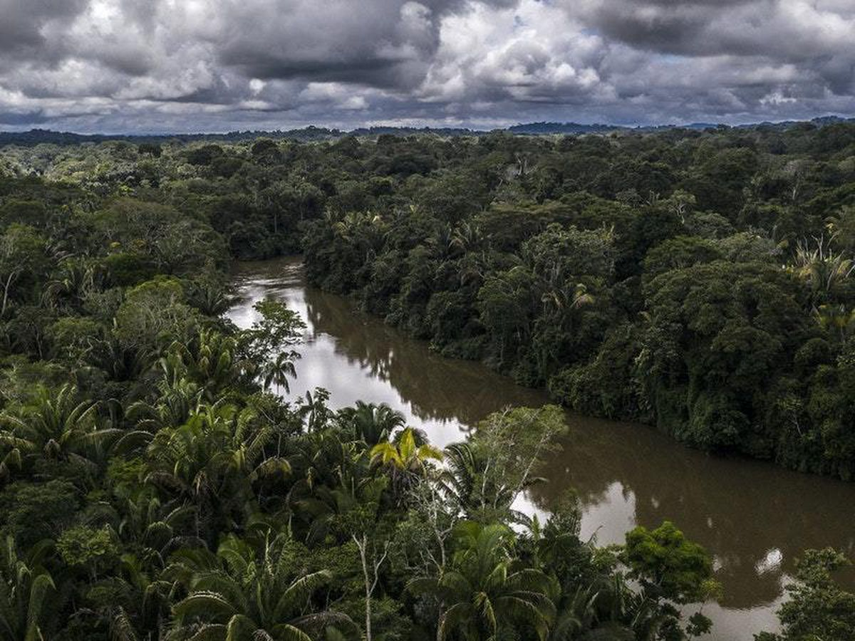 Supply chains can be linked to deforestation, destruction of habitat and human rights abuses (Marizilda Cruppe / WWF-UK)