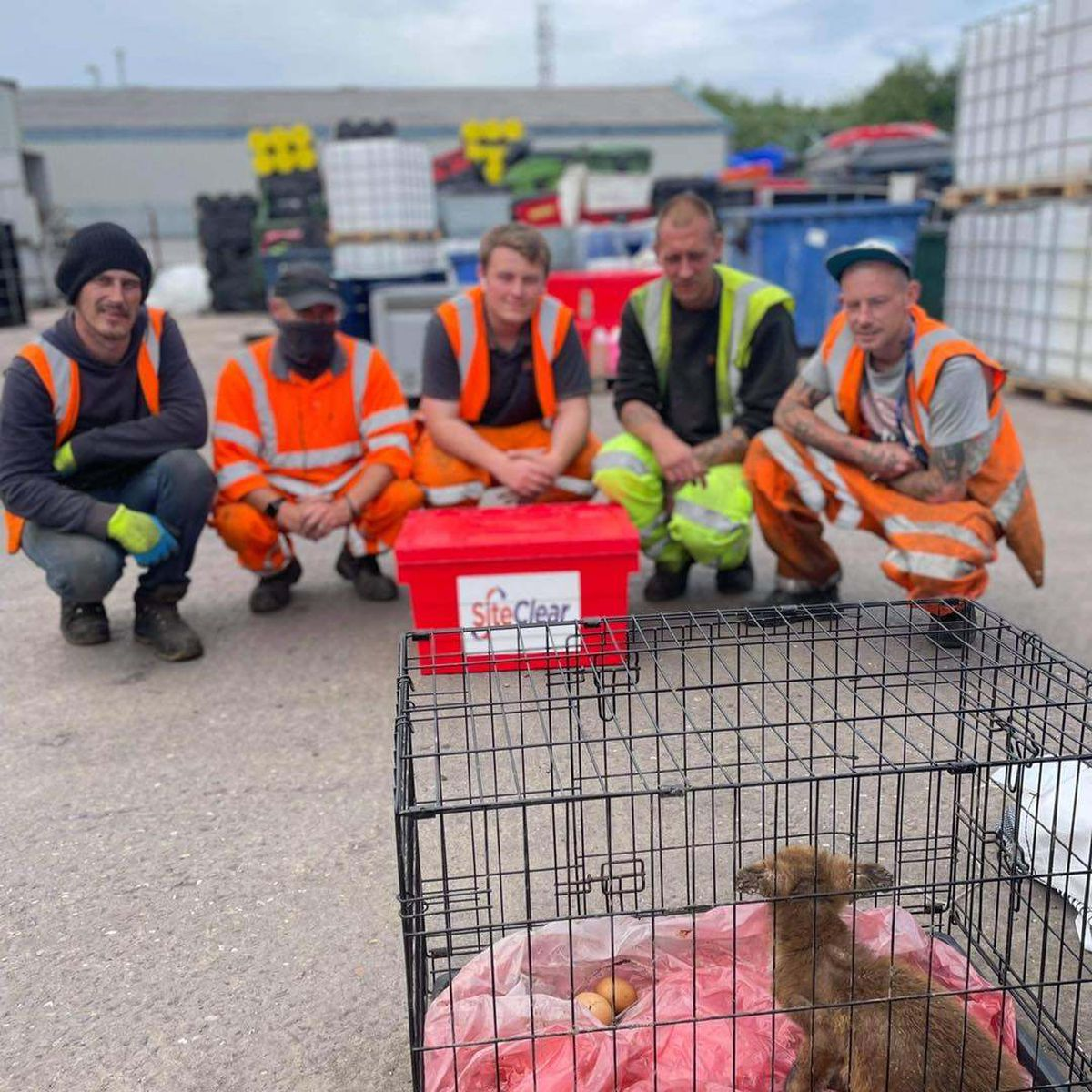 Some of the workers at Site Clear Solutions who looked after the cubs (Image by Site Clear Solutions)