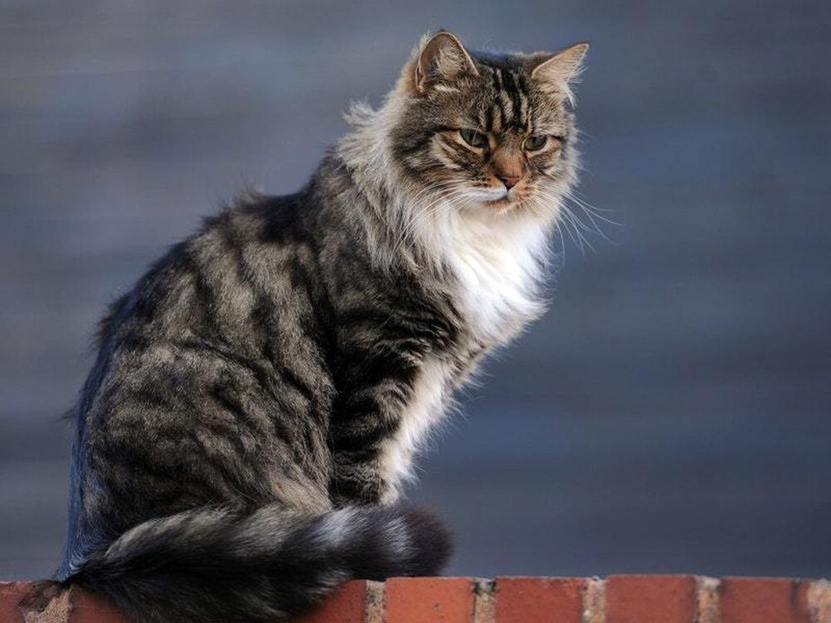 Pet owners are being urged to keep their cats indoors (stock photo)