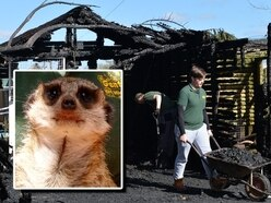 Wildlife centre fire repairs could cost £10,000 as Sybil the meerkat left without mate