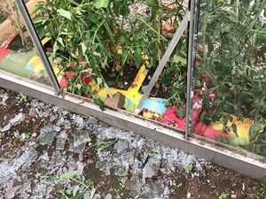 The vandalised greenhouse
