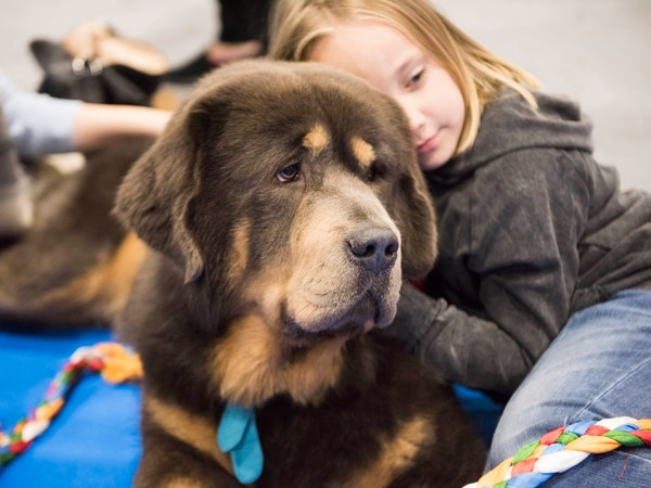 WIN: Tickets to the National Pet Show in Birmingham