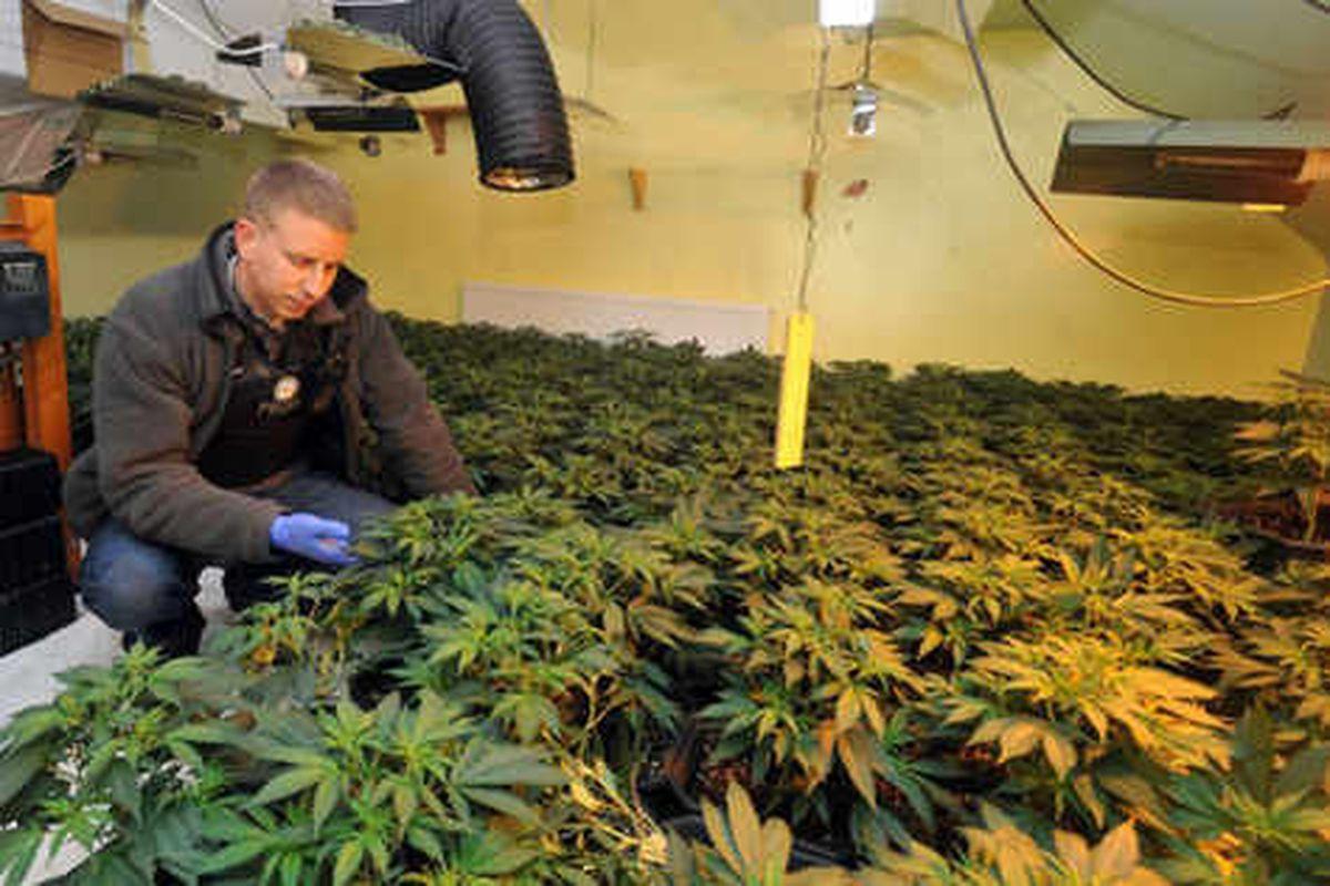 Police uncover Halesowen cannabis factory