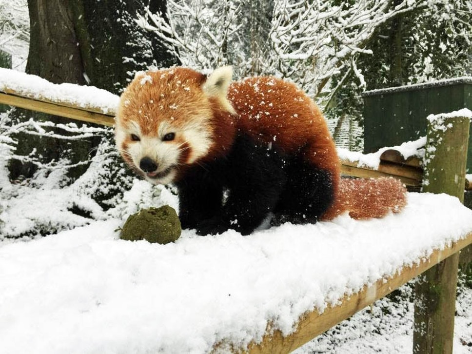 Snow fun for some: White stuff divides opinion at Dudley Zoo - in pictures