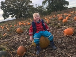Pick your own pumpkin patch coming to Lower Drayton Farm
