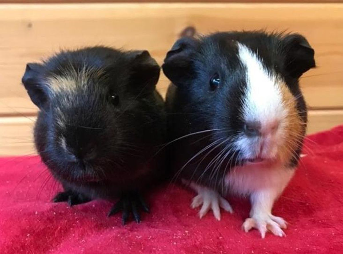 Faith and Ivy also need a new home. Photo: RSPCA