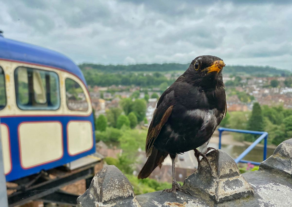 Bird at Bridgnorth Cliff Railway by Steven Ratcliife.
