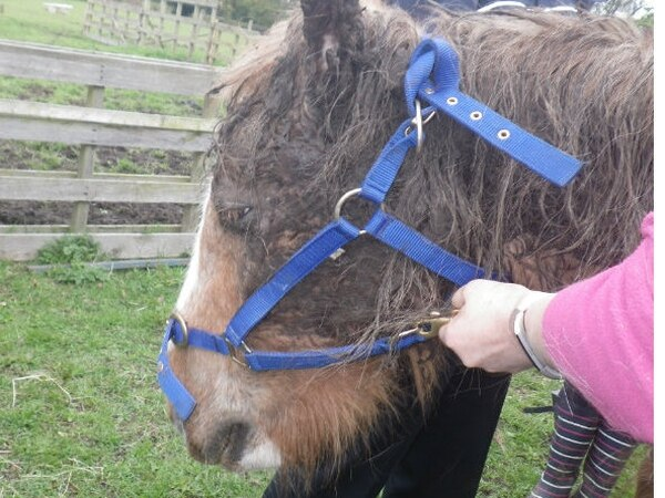 Ban for owner after horse found collapsed