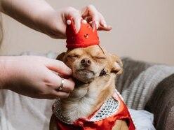 It's Princess Paris! Meet the dog with 25,000 Instagram followers