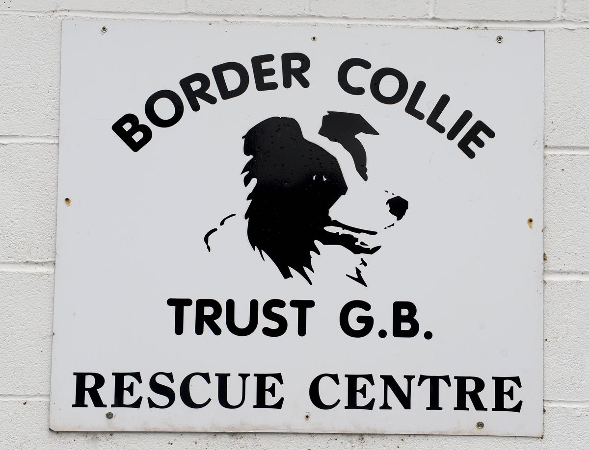 The Border Collie Trust Rescue Centre near Rugeley which have to move location because of the building of HS2 going through their land..