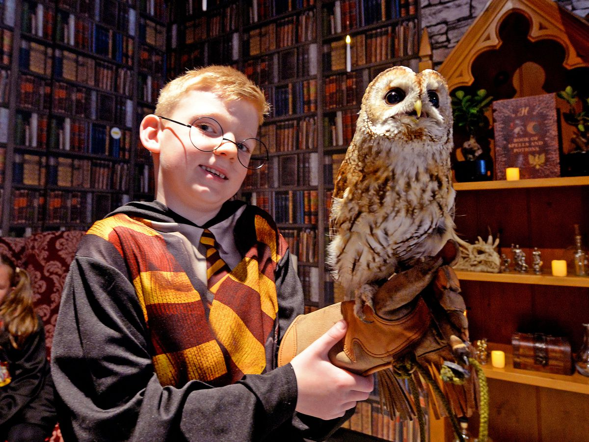 Customer and Potter fan Jacob Williams, aged 7, from Wednesbury, meets Aries the owl