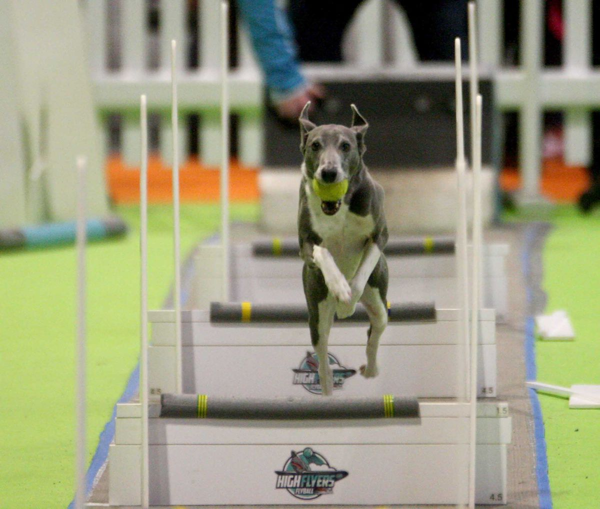 National Pet Show at Birmingham NEC. Pictures by: Andy Shaw