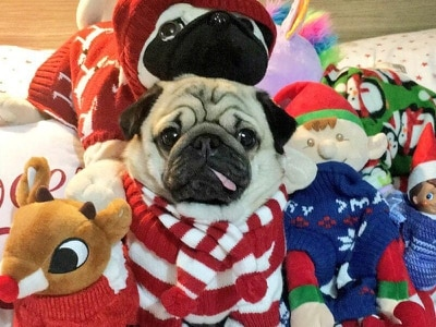 The heartwarming pictures to prove that Christmas Jumper Day is definitely not just for people