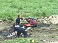 Man stuck waist-deep in mud while rescuing pet parrot freed by firefighters