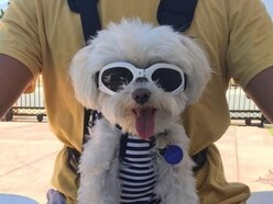 This dog's indisputable fashion sense has made him an online star