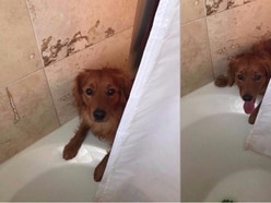 There's no love like this dog looking out for his owner in the 'scary' shower