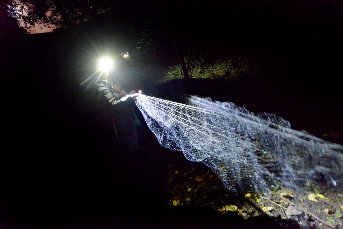 The nets are used as a humane way to record different species