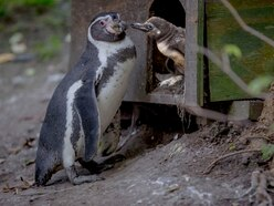 Free entry to Dudley Zoo for mums this Mother's Day