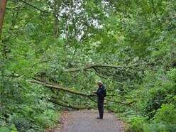 Stafford's Isabel Trail still closed one week after tree fall death