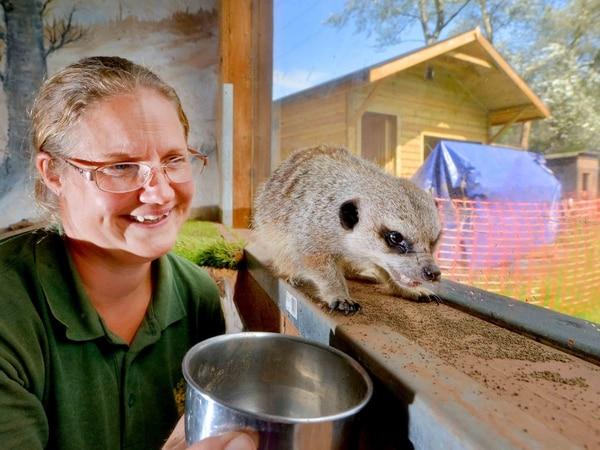 WATCH: New home ready for meerkats after Gentleshaw Wildlife Centre fire