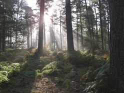 Cannock Chase Forest closed amid danger from high winds