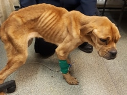 Appeal to find owner of dog left for dead near Albrighton woods