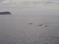 Stunning aerial footage of a pod of dolphins captured off the Isle of Man coast