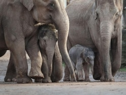 Warning of risk to Asian elephants amid Chinese demand for skin