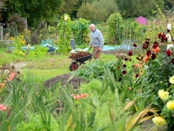 Find out how to live the good life with an allotment