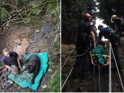 Hefty hound pulled to safety after being stranded 100ft down river bank