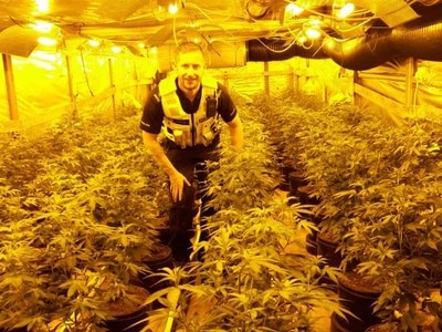 Flushed out: Cannabis farm found behind fake toilet in Wednesbury