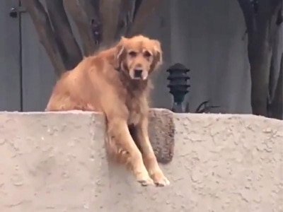 This smart dog drops his toys near strangers so they are forced to play with him