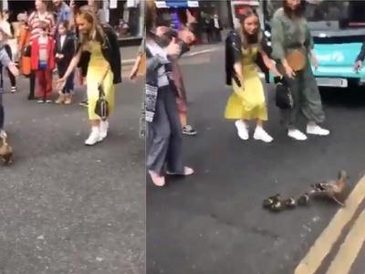 Watch: Ducklings escorted across street by Glasgow pedestrians