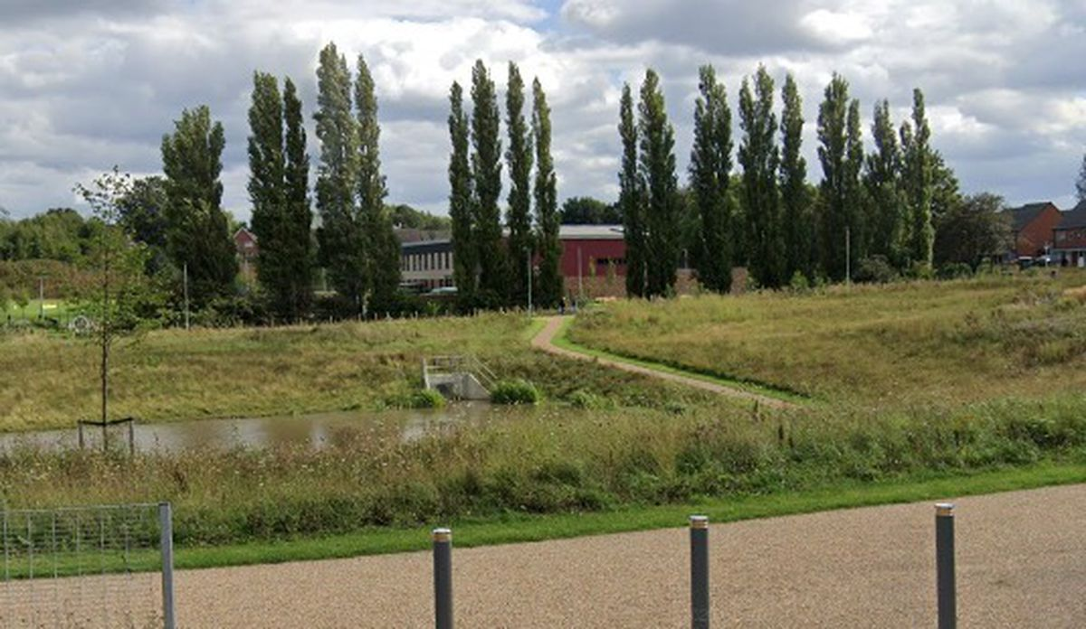 The potentially dangerous poplar trees facing the axe, with Loxdale Primary School, Bilston, behind them. Photo: Google Street View