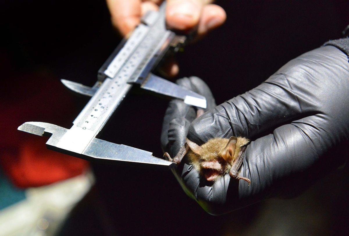 Measuring a bat