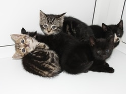 Ricky, Ringo, Ronnie, Rossi and Romeo the kittens rescued from crusher