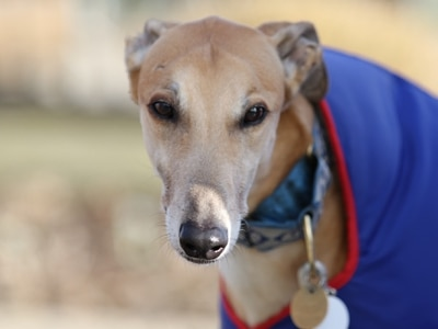 Greyhound Trust appeals for donations amid coronavirus outbreak