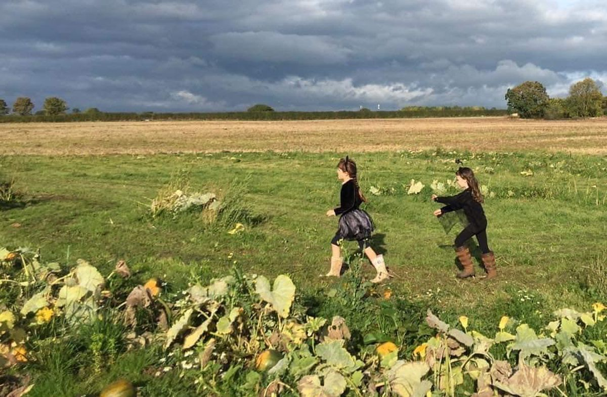 Pick your own pumpkins at Lower Drayton Farm this Halloween
